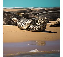 Beautifully Poised Seal Photographic Print