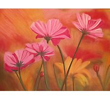 Pink & Yellow flowers Photographic Print