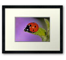 Bug Off Framed Print