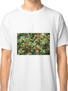 Red berrie tree Classic T-Shirt
