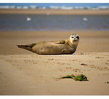 Amazing Seal Pup Photographic Print