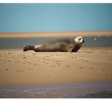 Thoughtful Seal Photographic Print
