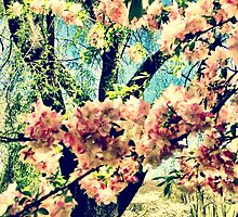 Cherry Blossom Explosion by UnChienAndalou
