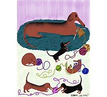 Knitting Dachshund Photographic Print