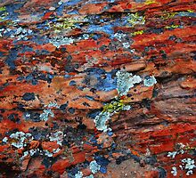 Lichen On Stone by Ron Hannah
