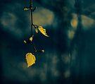 Leaf by Ingrid Beddoes