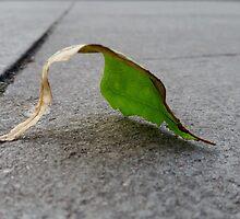 Leaf Study(3) by Vanessa  Warren