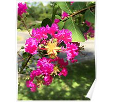 Rhododendron 2 Poster