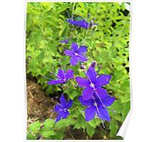 Speedwell Flower Poster