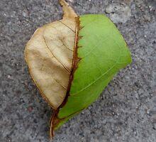Leaf Study(2) by Vanessa  Warren