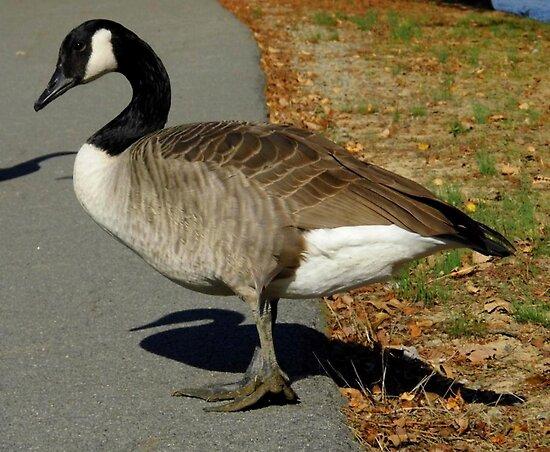 Loosey Goosey by WildestArt
