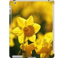 Yellow spring Daffodils iPad Case/Skin