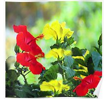 Red and Yellow Hibiscus Poster