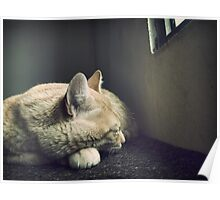Beauty Is a Sleeping Cat  Poster