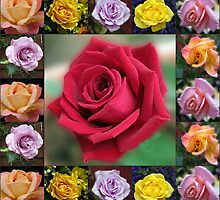 Dreamy Roses Collage by BlueMoonRose