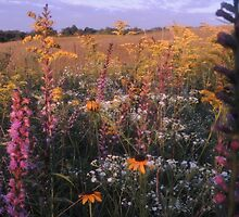Chaparral Prairie Wild Flowers, Adams County, Ohio by TrendleEllwood