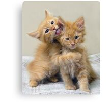 Orange Tabby Kittens Canvas Print