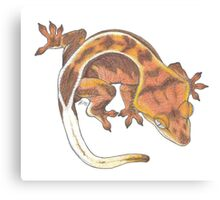 Red Crested Gecko  Canvas Print