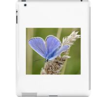 Common Blue Butterfly iPad Case/Skin