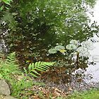 A Pond to Ponder by Sandra Fortier