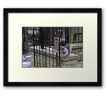 Stereotypical Squirrel Framed Print