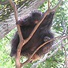 Porcupine in Tree by caybeach