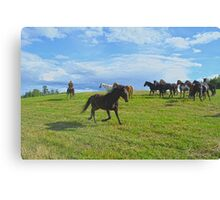 The Round Up Canvas Print