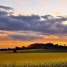 Sunset Canola by julie anne  grattan