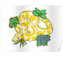Albino Ball Pythons with Succulents Poster