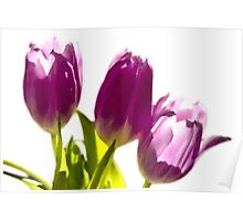 Tulips In The Morning Light - Digital Oil Poster