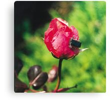 Rose with electronic bug Canvas Print