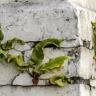 An Old Wall Goes Green,,,,,,,,,,,,  by lynn carter