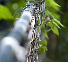 Disappearing Fence by Kae'tî Stolarski