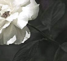 Late Bloomer by Kae'tî Stolarski