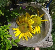 Sun in a bowl on a chair by Carol Dumousseau
