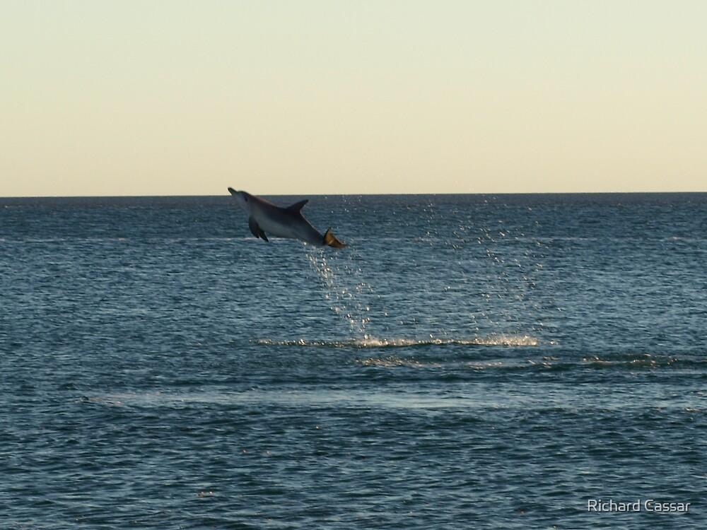 I can fly!!! Dolphin Jump by Richard Cassar