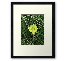 Flower 11 Framed Print
