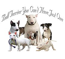 Bull Terrier Can't Have Just One Photographic Print