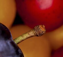 Wild plums by AWLPIX