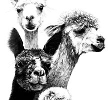 Alpacas Are Awesome! by fullcirclemandalas  is Marg Thomson