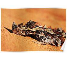 """Let Snoozing Dragons Lie"" Thorny Devil, Western Australia Poster"