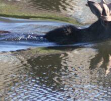 Swimming Moose Sticker