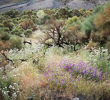 The Vegetation of Vulcano by laurabaker