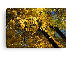 Golden Canopy - Look Up to the Trees and Enjoy Autumn - Horizontal Right Canvas Print