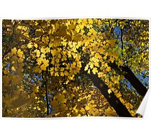 Golden Canopy - Look Up to the Trees and Enjoy Autumn - Horizontal Right Poster