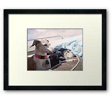 Canine Boat Cruise Framed Print