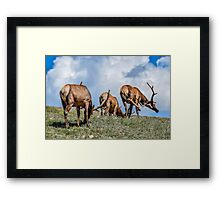 Three Bulls Framed Print