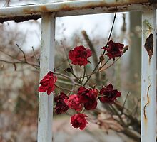 Rusty Wild Roses by bethanyhorvath