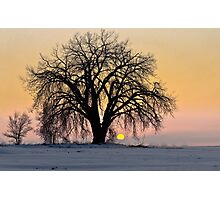 Cottonwood Cold Sunrise Photographic Print