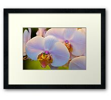Pink Orchids, Close-up Framed Print